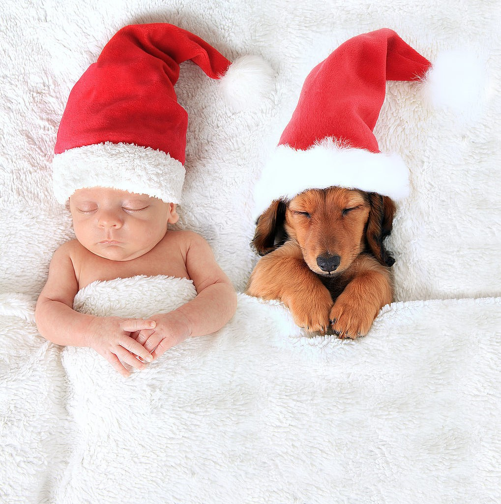 Adorable-Baby-Puppy-Christmas-Picture-Ideas